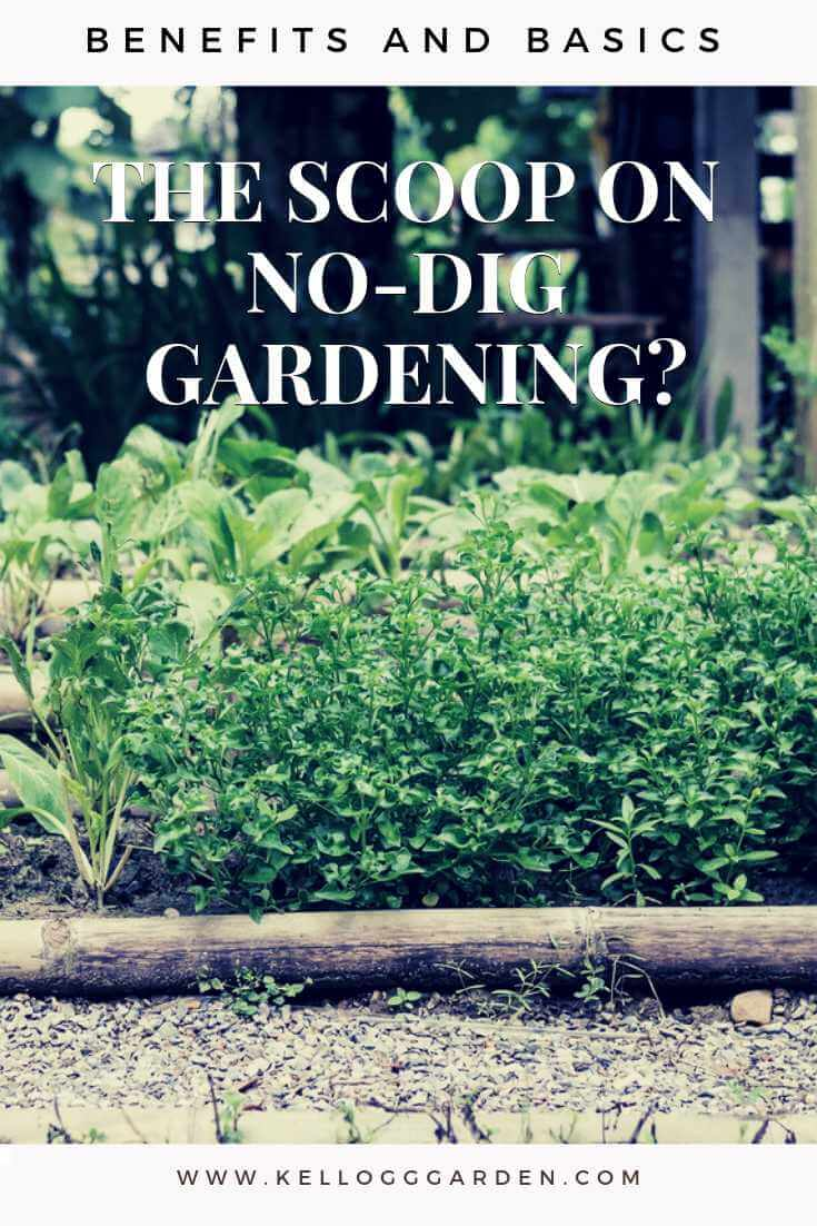 what is no-dig gardening
