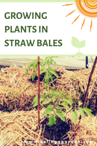 How to grow plants in straw bales pin