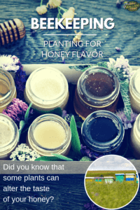Planting for honey flavor pin