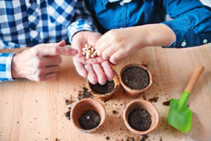 Planting seeds in little pots