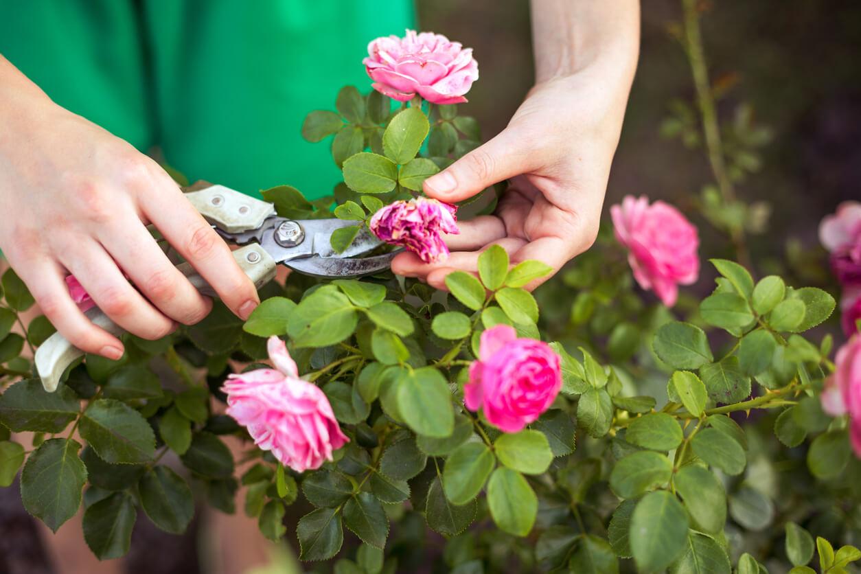 Pruning-Garden