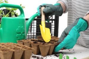Sowing seed into a pot