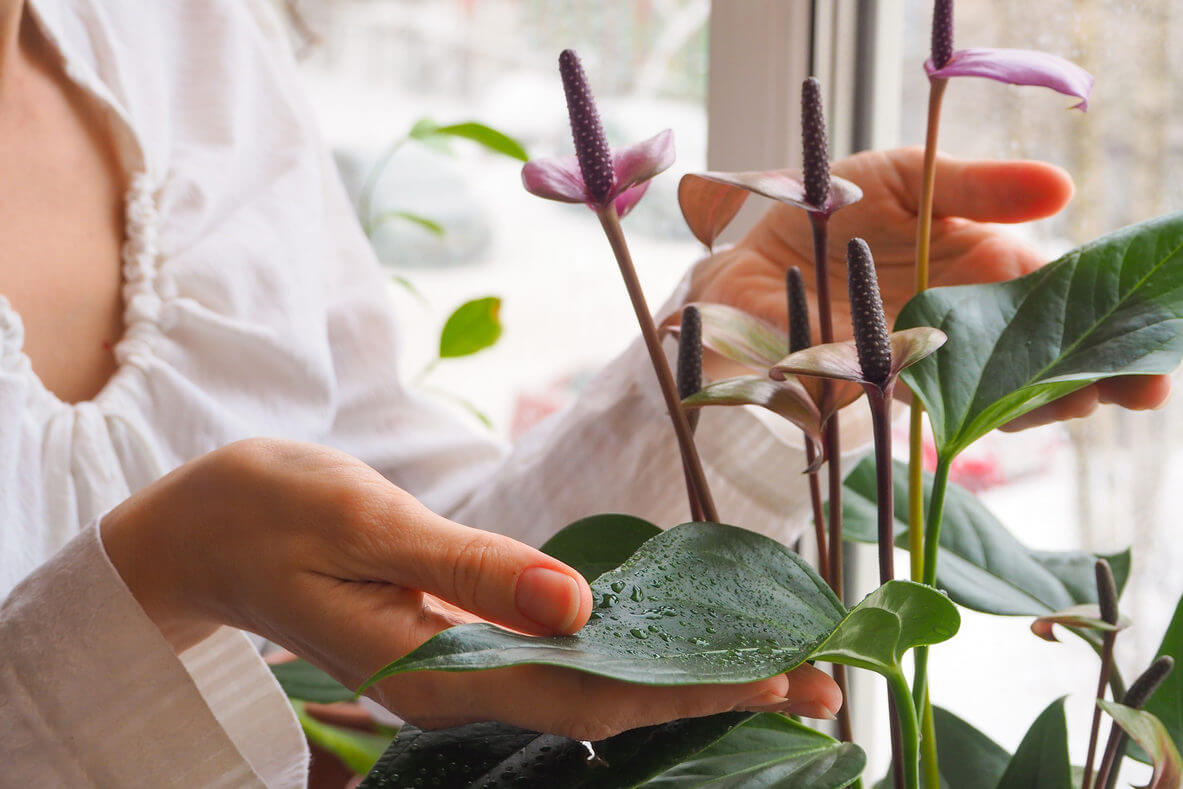 Taking-Care-of-Plants