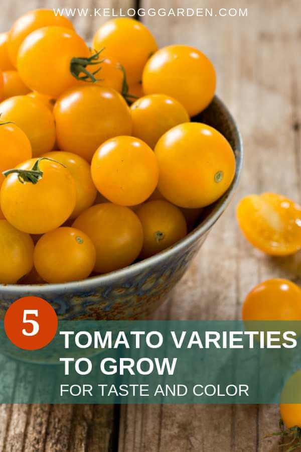 Tomato varieties for taste and color pin