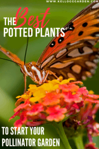 Top Potted Plants to Entice Pollinators Pinterest image with a butterfly landing on a flower.