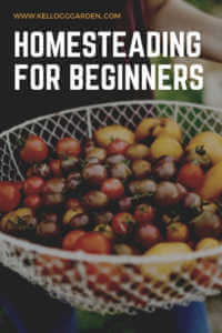 """Basket filled with freshly harvest tomatoes with text, """"Homesteading for beginners"""""""