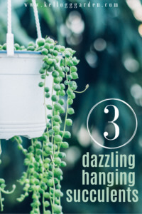 Hanging Succulent pin