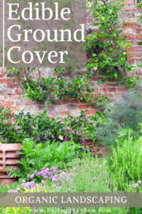 """Wall covered in plants with text, """"Edible Ground Cover, Organic Landscaping"""""""