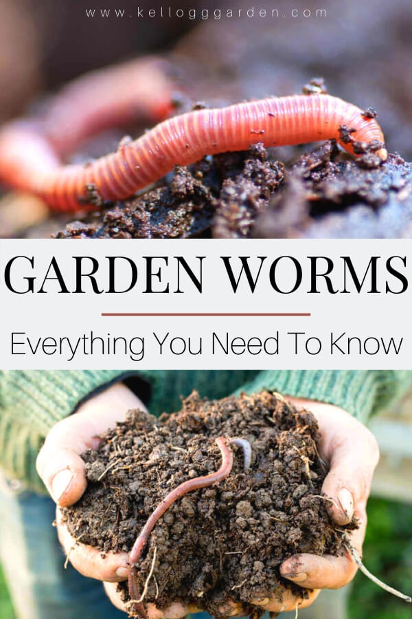 "A picture of a woman holding soil with a garden worm and a close up photo of a red worm, with text, ""Garden Worms, Everything You Need to Know"""