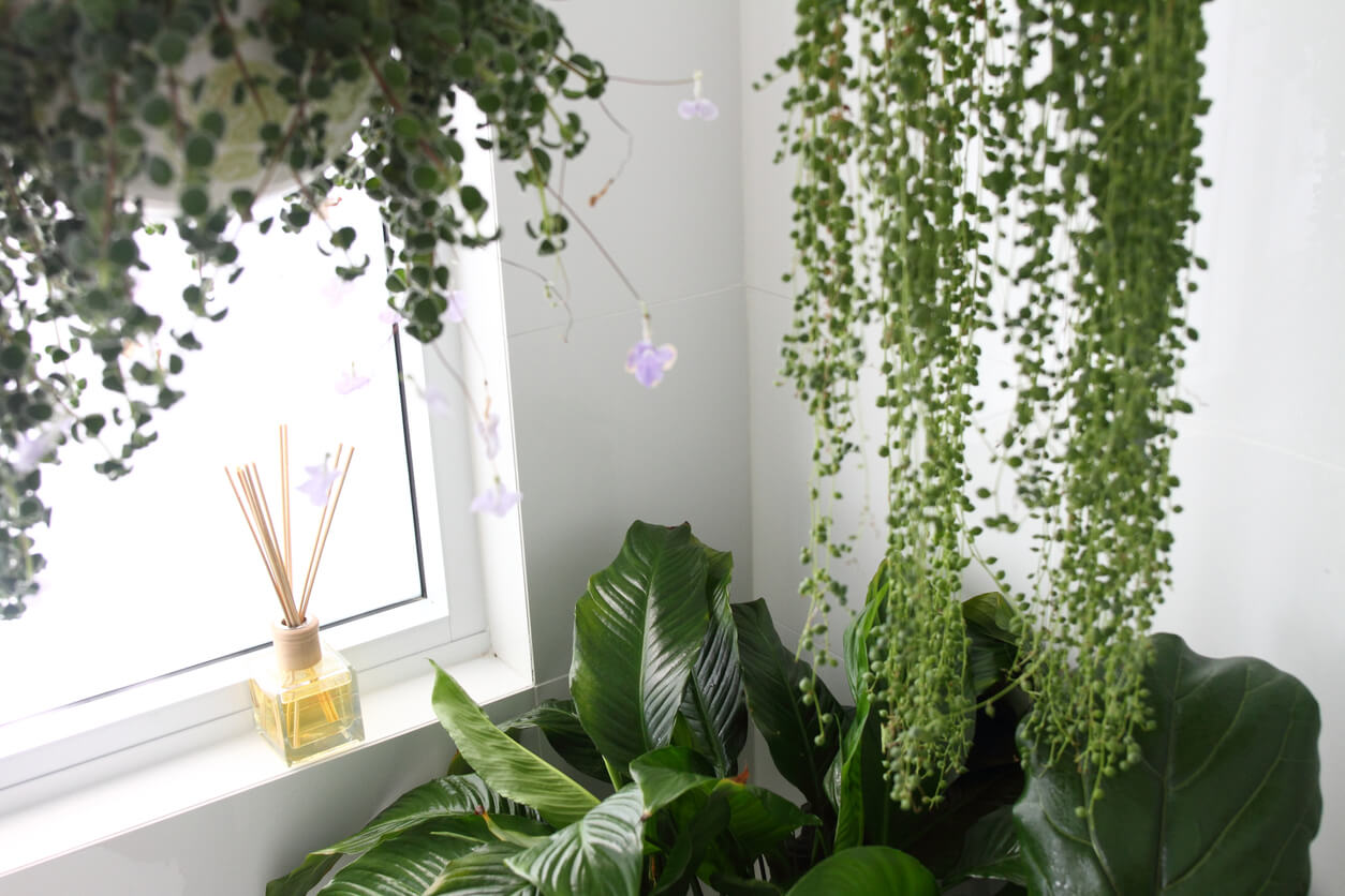 Indoor plants with hanging succulents