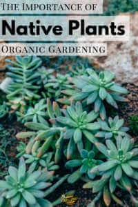 """Succulent garden with text, """"The importance of native plants organic gardening"""""""