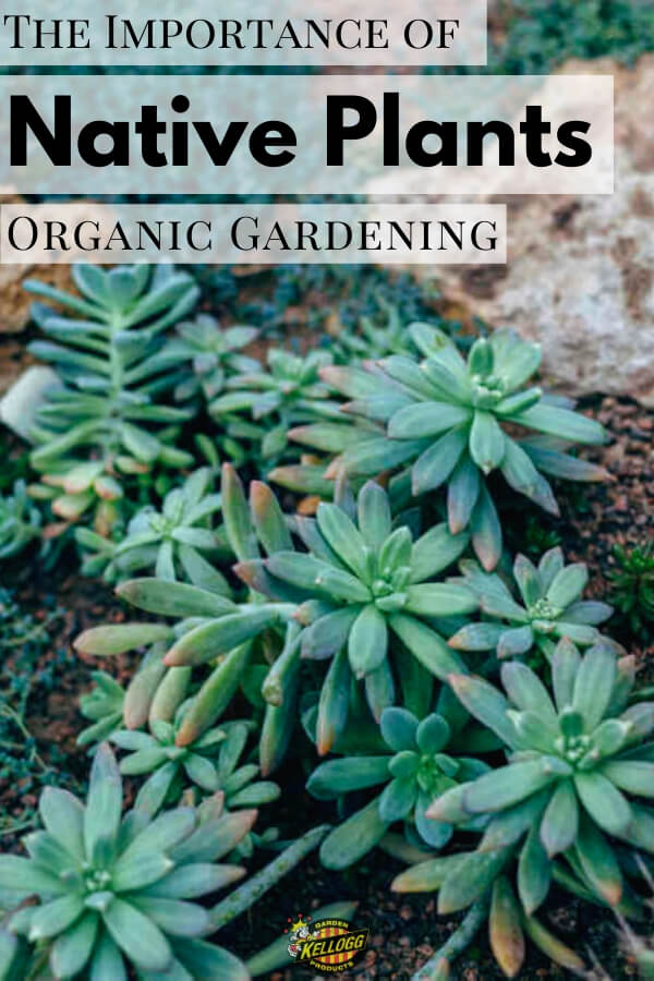 "Succulent garden with text, ""The importance of native plants organic gardening"""