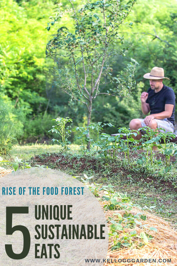 Man in his food forest garden