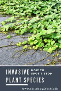 invasive plant pinterest image