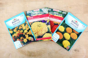 Four seed packets spread out for Zinnia and Marigold flowers