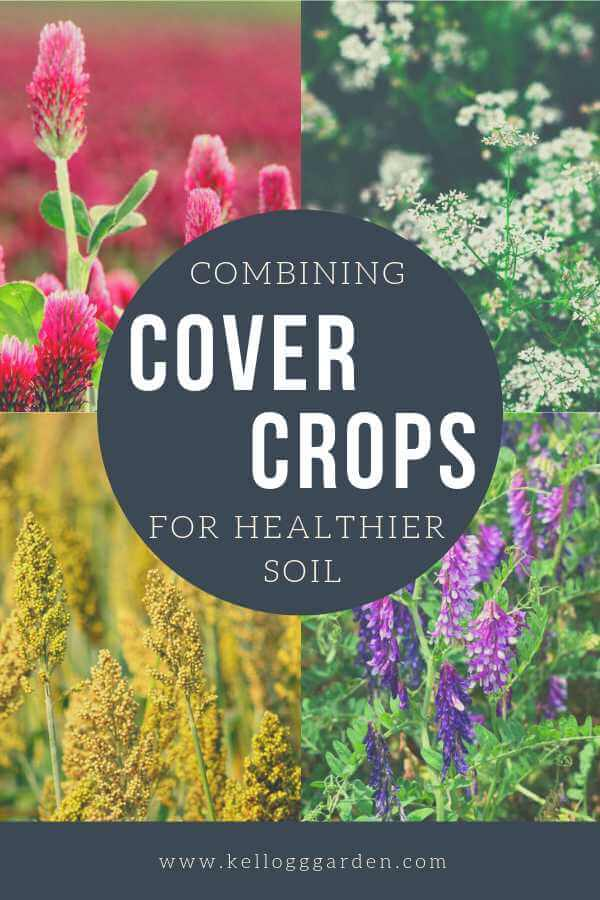 Combining Cover Crops pinterest image