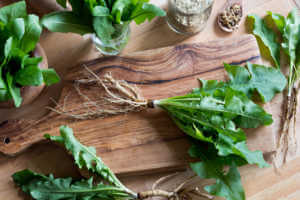 Dandelion root with leaves on a wooden cutting board