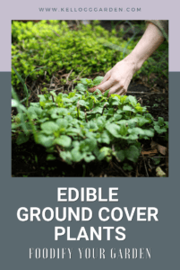Edible Ground Cover