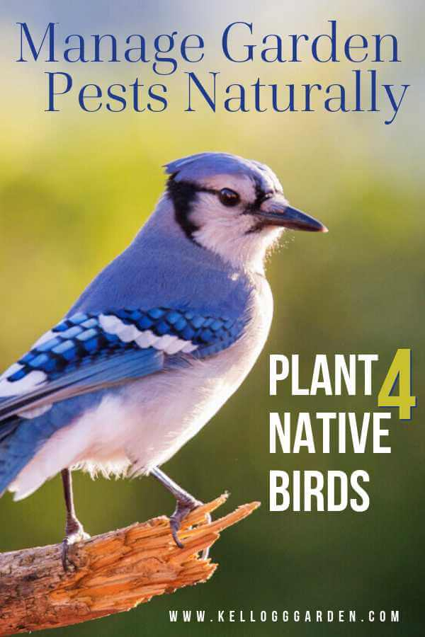 plant-for-native-birds
