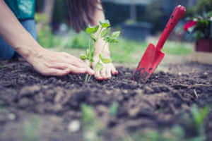 Person repotting flowers in garden