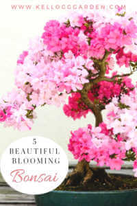 Blooming Bonsai pinterest image