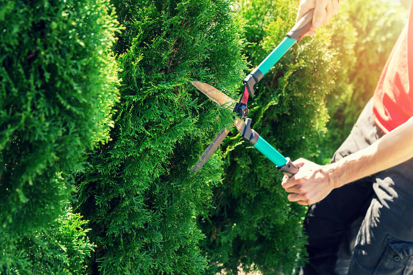 Pruning Hedge