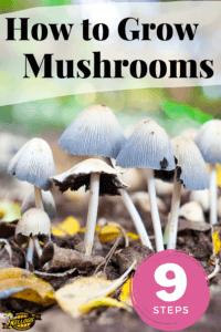 six mushrooms growing