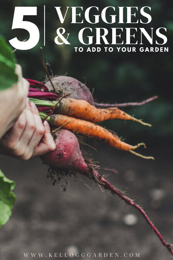 "Person holding freshly pulled beets and carrots with text, ""5 veggies and greens to add to your garden"""