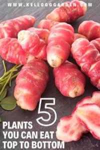 Plants you can eat top to bottom pinterest image