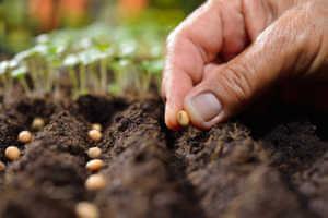 Planting Veggie Seeds