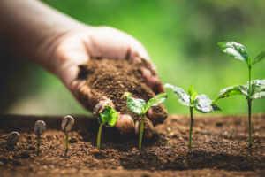 Coffee seedlings in nature