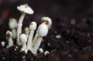 Little mushrooms sprouting