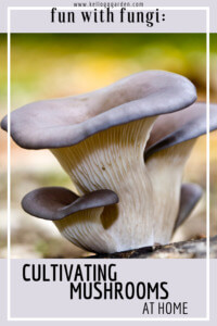 Cultivating mushrooms at home pinterest image