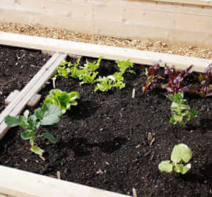 variety of plants growing in garden bed