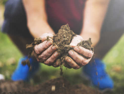 Woman holding soil in her hands