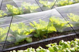 Plastic greenhouse for farming vegetables