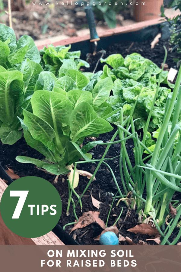 veggie crops in a garden bed
