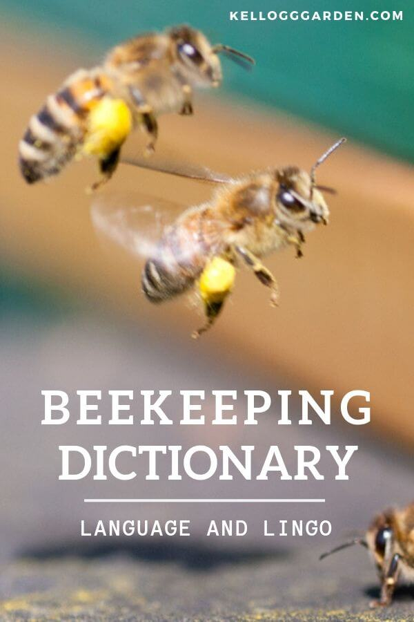 beekeeping dictionary pinterest image