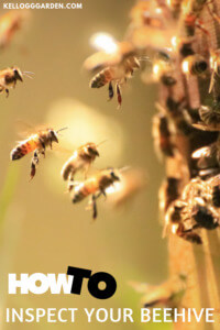 Beehive Inspection canva