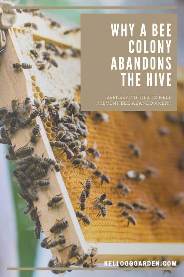 bee colony pinterest image