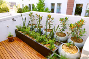 Potted plants on balcony