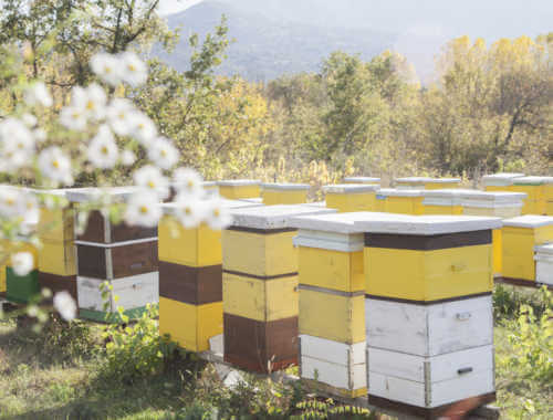 Bee houses in nature