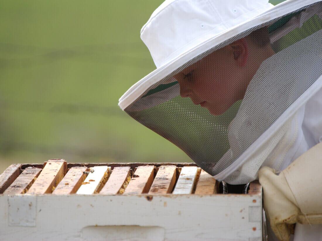 kid looking at beehive