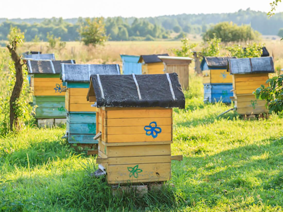 Beekeeper Apiary