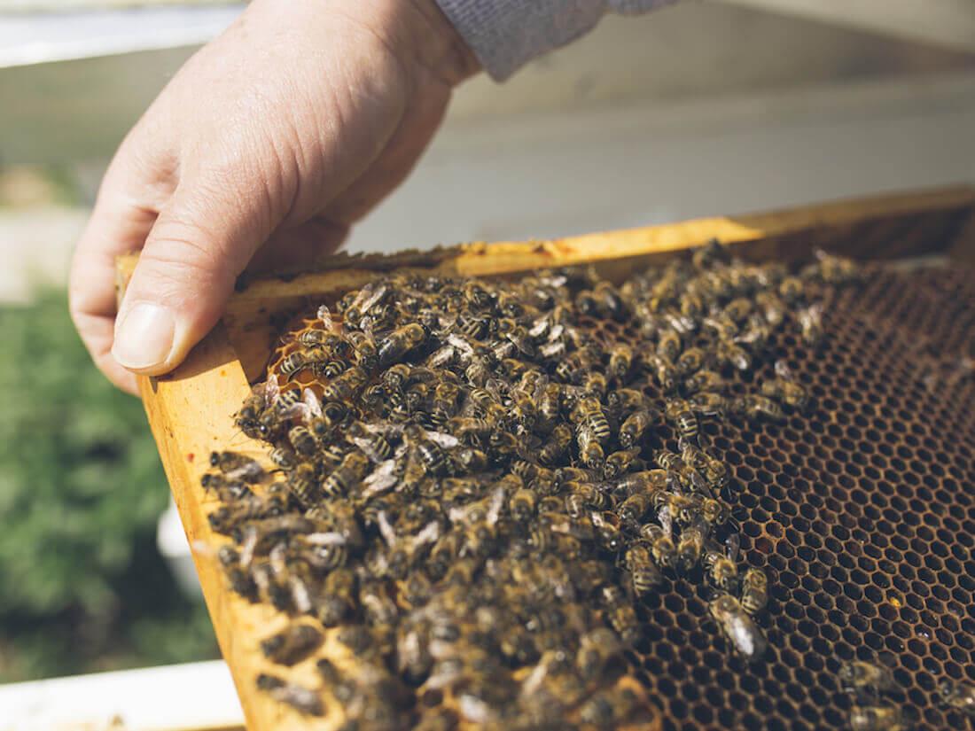Beekeeper frame