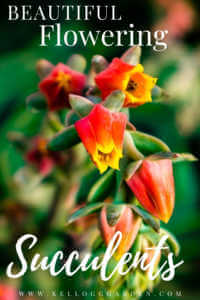 """Flowering succulent macro with text, """"Beautiful flowering succulents"""""""