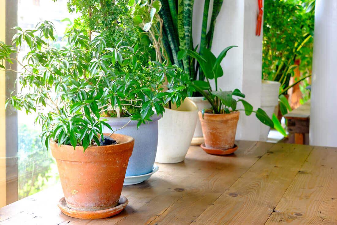 Houseplants in the sun