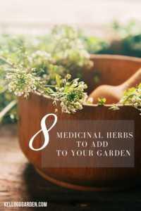 medicinal herbs pinterest image