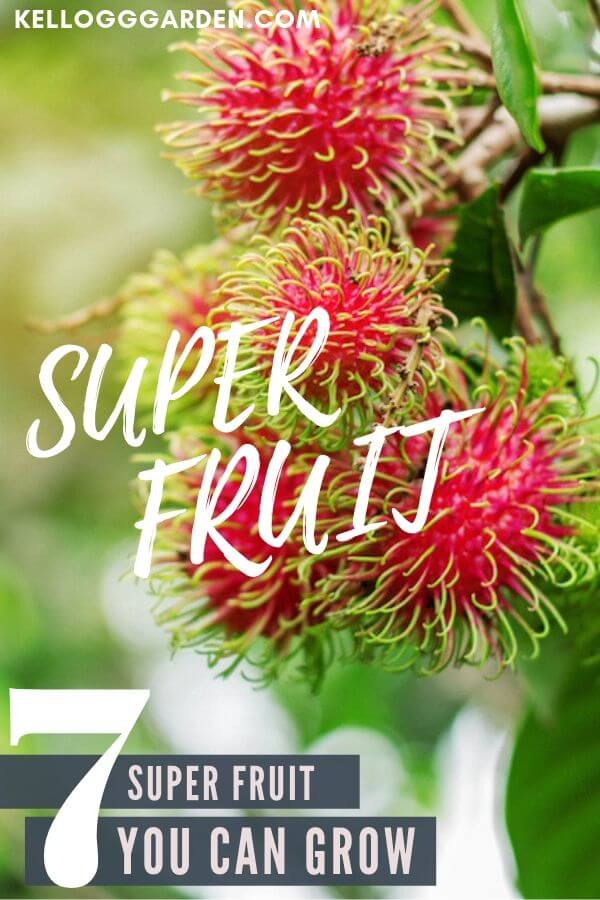 super fruit pinterest images
