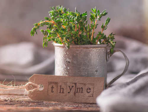 Thyme feature